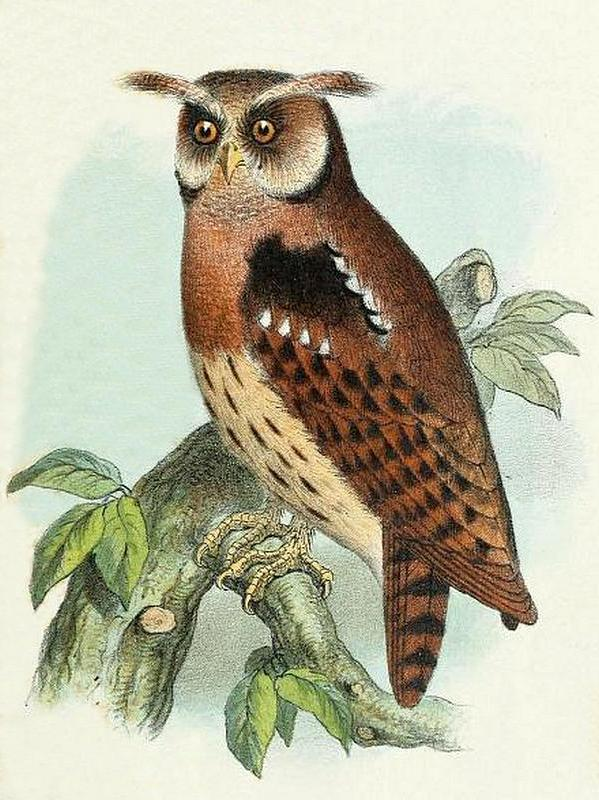 owl on jumala kaalulangus rasva kaotuse eksperdiarvamused