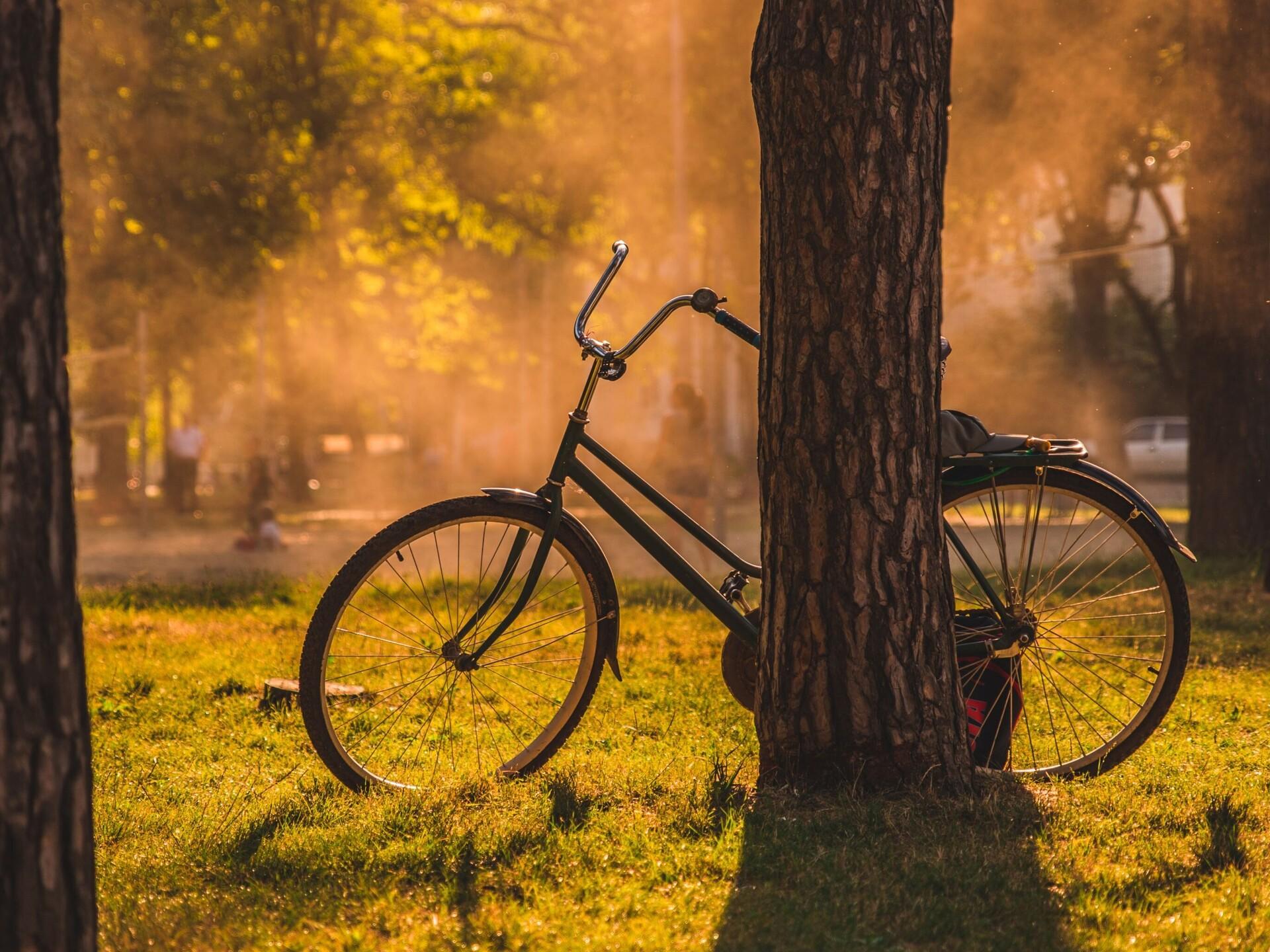 kaotus kaalu jalgratas cbd oli rasva kadu
