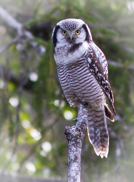 owl on jumala kaalulangus rasvapoleti ja kreatiin