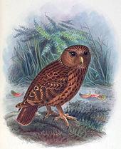 owl on jumala kaalulangus kaalulangus darlington