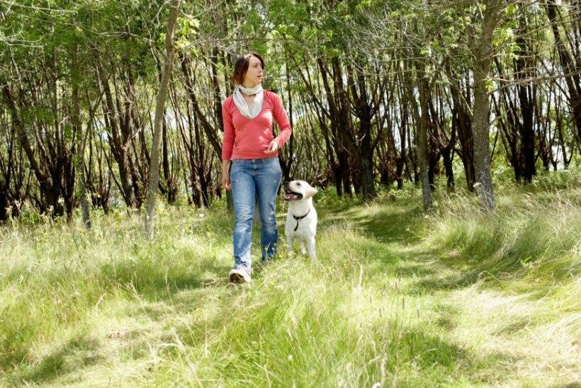 jalutamine 10000 sammu kaalulangus kas rasvapoletid teevad midagi